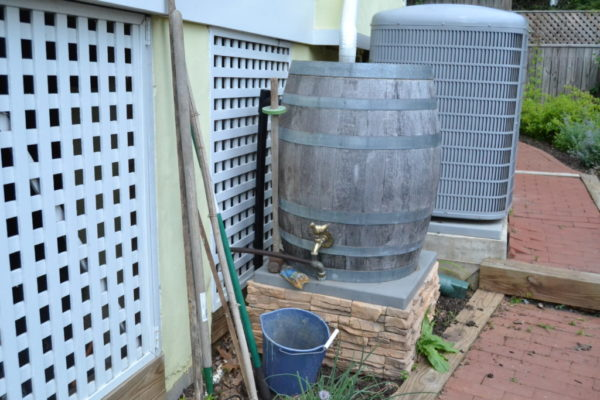 A barrel collects rain water that Wientzen uses on her garden.