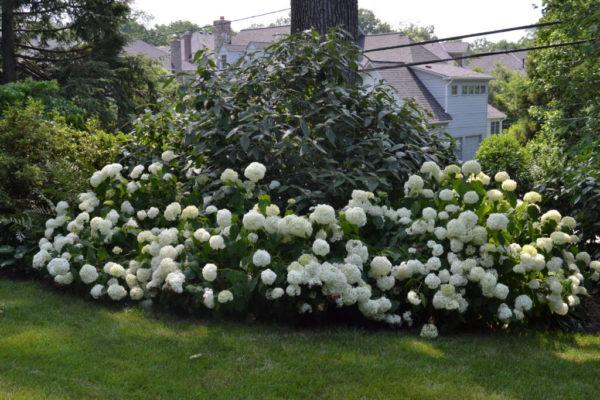 Wientzen's garden.