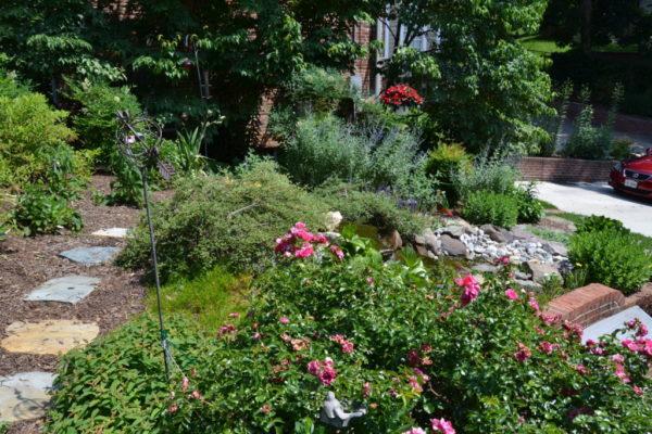 Murnane's garden.
