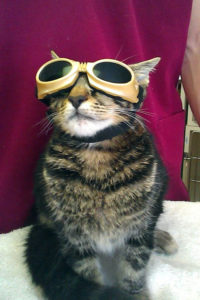 Cat about to under laser treatment