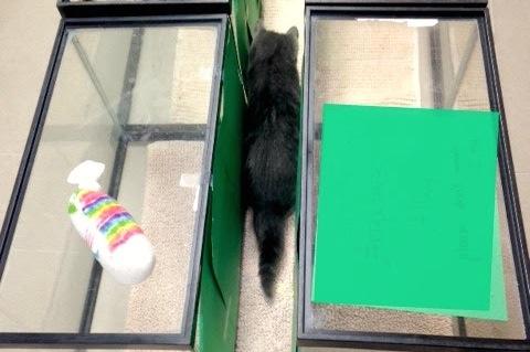 "AWLA veterinarians made a special ""alley"" for Speedo. (via Animal Welfare League of Arlington)"