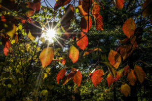 10/19/14 leaves (Flickr pool photo by Wolfkann)