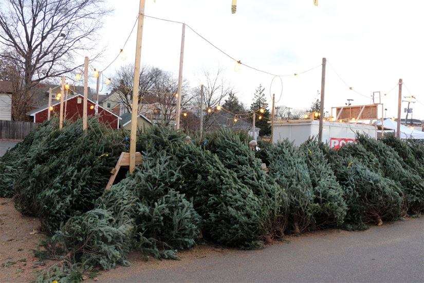 the optimist clubs christmas tree sale at 2213 n glebe road - Where To Buy Christmas Tree