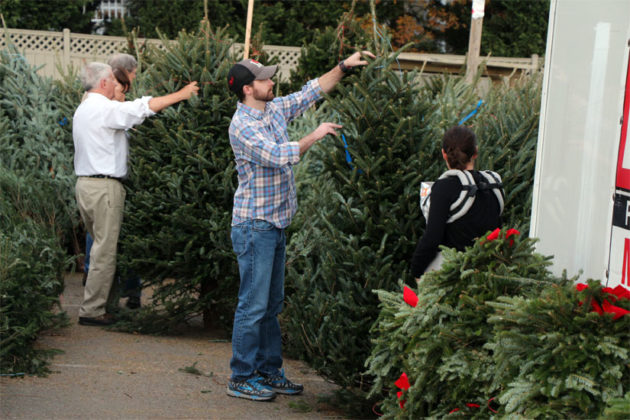 christmas tree sale underway at highway and glebe road