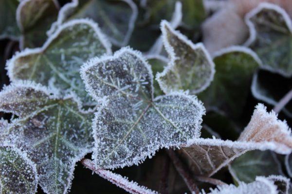 Frost-covered leaf (Flickr pool photo by ksrjghkegkdhgkk)
