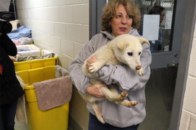 A worker from the Washington Animal Rescue League with a dog rescued from a Korean meat farm