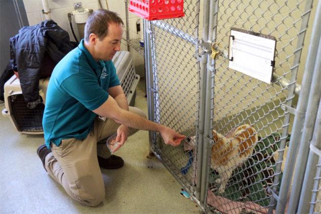 AWLA Director of Behavior and Adoptions Kevin Simpson gives a treat to Corgi mix Abi