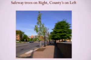 On the left, a county tree in Cherrydale. On the right, a tree planted by Safeway (photo via Cherrydale Citizens Association)