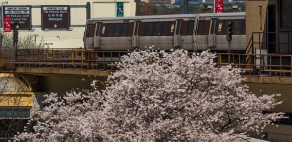 Metro train at DCA with cherry blossoms in the foreground (Flickr pool photo by John Sonderman)
