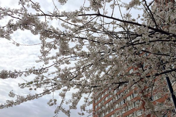 Spring blooms in Pentagon City