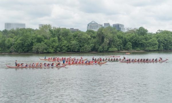Dragon boat races on the Potomac with Roosevelt Island and Rosslyn in the background (Flickr pool photo by John Sonderman)