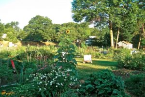 Arl Comm Garden