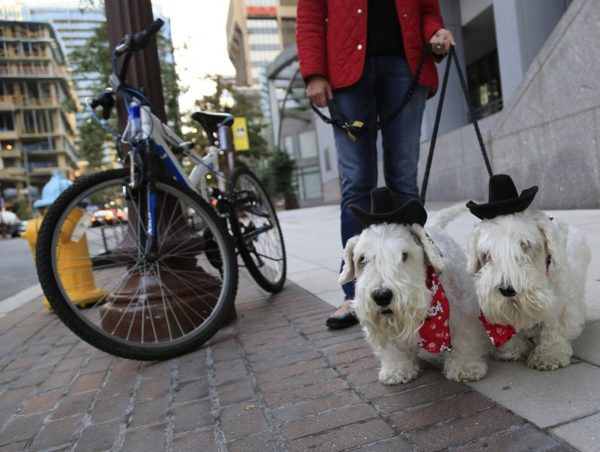Two dogs in Rosslyn who are ready for Halloween (Flickr pool photo by TheBeltWalk)