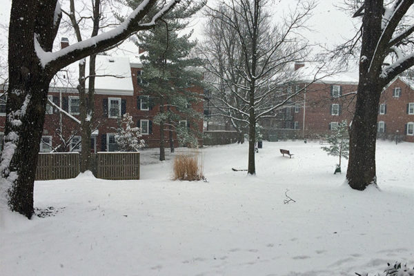 Snow on 2/15/16