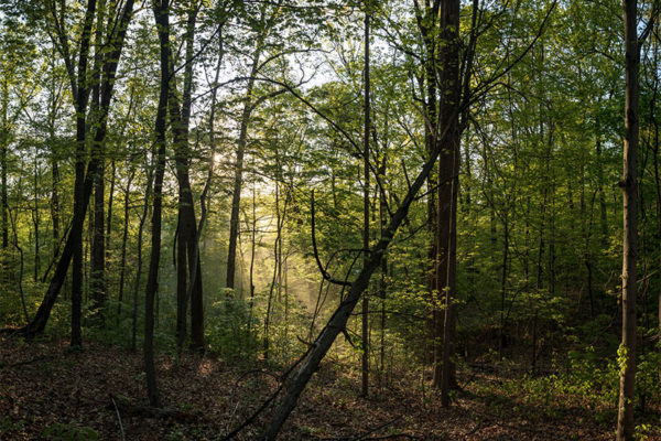 Glencarlyn forest (Flickr pool photo by Dennis Dimick)