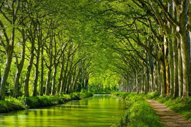 Canal du Midi, the impressive and magical canal of France, best seen with Julia on a boat!