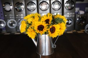 Sunflowers in WeLive in Crystal City