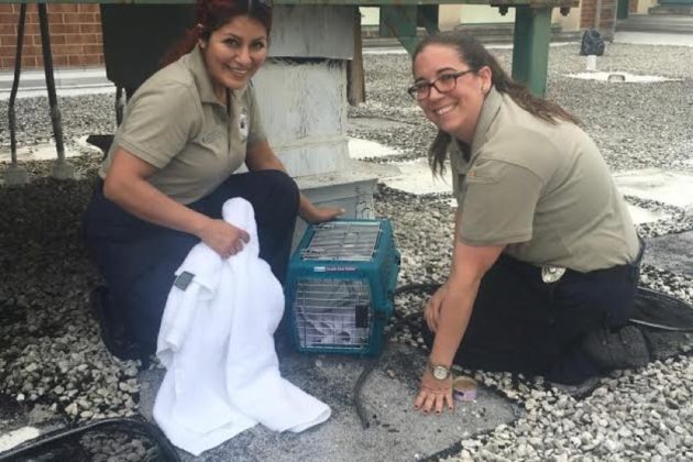 Gunston kitten rescue (photo courtesy AWLA)