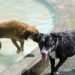 Dogs cool off at the James Hunter Dog Park