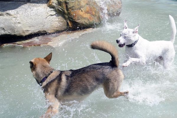 Dogs cools off and play at the James Hunter Dog Park (photo by Jackie Friedman)