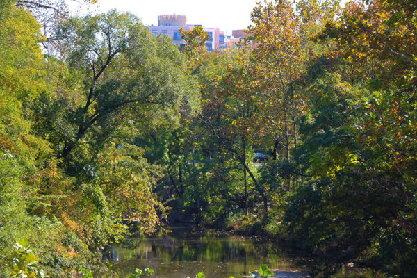 Creek and trees near Rosslyn