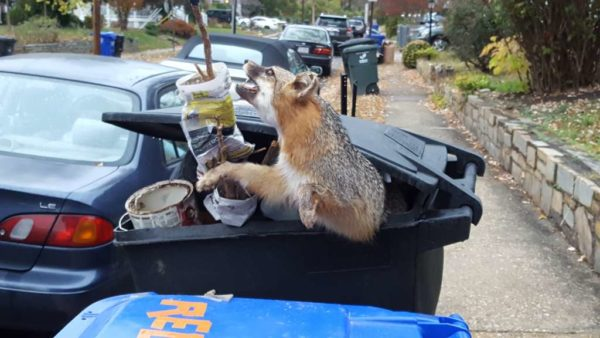 Unusual trash day items (Photo courtesy Peter Golkin)