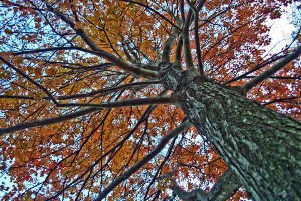 Orange leaves on a tree in autumn (Flickr pool photo by Bekah Richards)