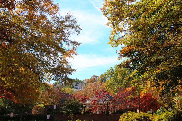 View to Fairlington from the Windgate in autumn
