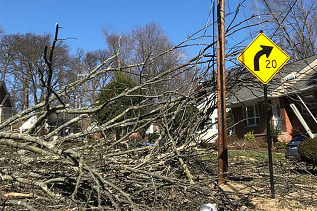 Tree damage on 26th and 31st Sts N. (photo courtesy Anne Wilson)