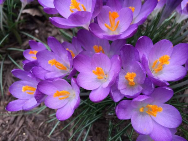 February flowers, photo via Flickr/Lisa Novak