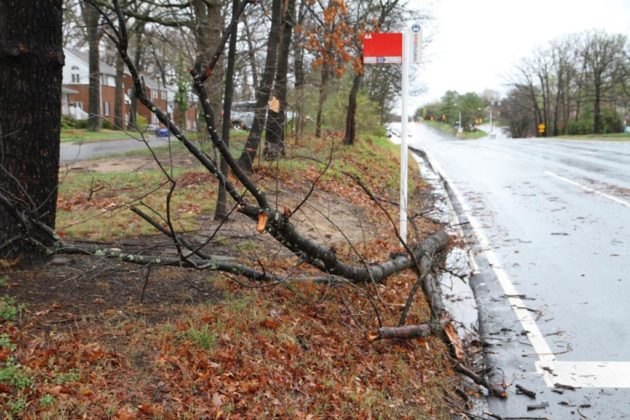 A fallen tree on Lee Highway at N. Park Drive damaged a car by a bus stop