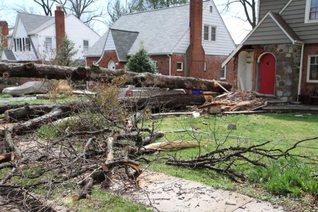 A fallen tree damaged a home on N. Wakefield Street