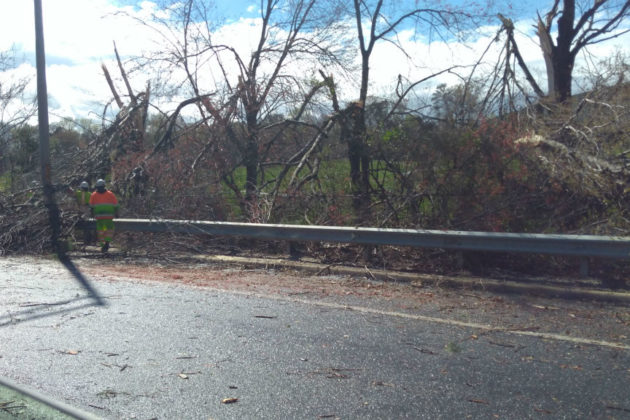 Damaged trees along I-395 south near Army Navy Country Club