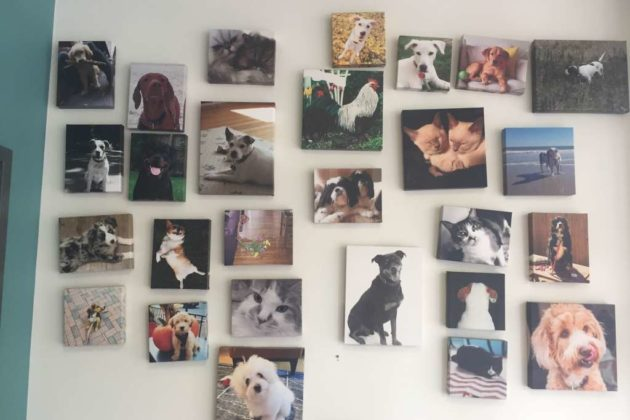 Inside the waiting room of Clarendon Animal Care