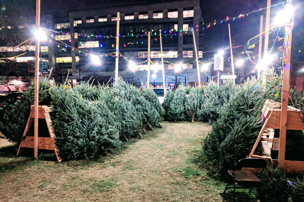 free christmas trees at lions club lot arlnow com tree service logos for truck tree service logo maker