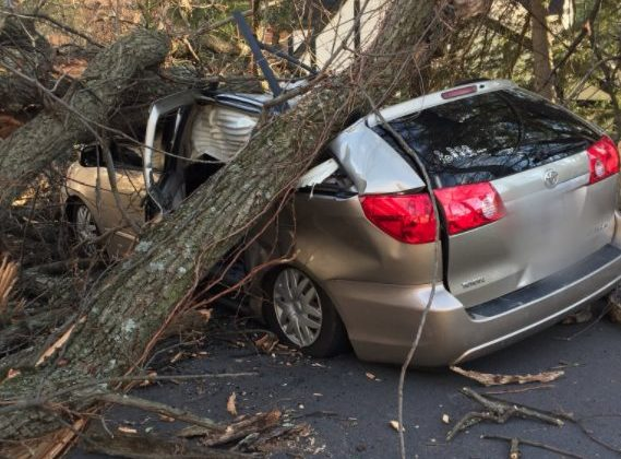 Tree that fell on a minivan on Vacation Lane (photo via ACFD)