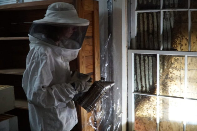 A bee keeper relocating bees (photo via Arlington County)